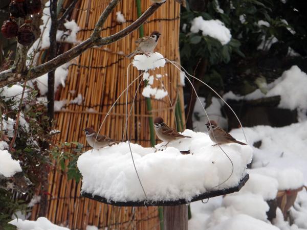 すずめちゃん、いきなり真冬の天気に・・・_a0136293_17035307.jpg