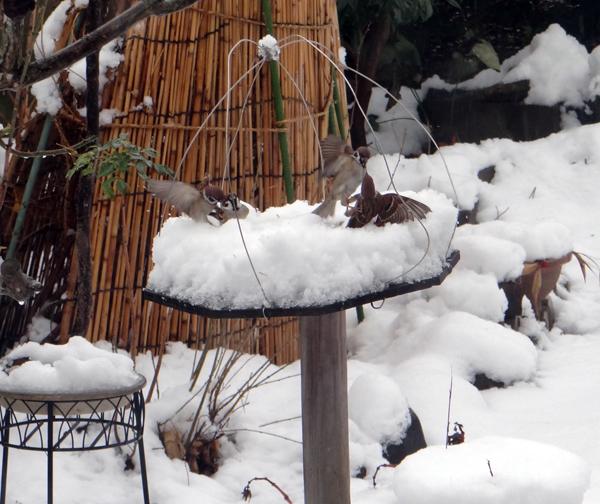 すずめちゃん、いきなり真冬の天気に・・・_a0136293_17091649.jpg