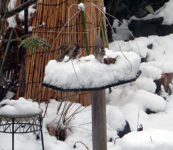 すずめちゃん、いきなり真冬の天気に・・・_a0136293_17092938.jpg