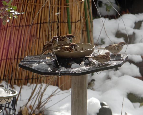 すずめちゃん、いきなり真冬の天気に・・・_a0136293_17170451.jpg