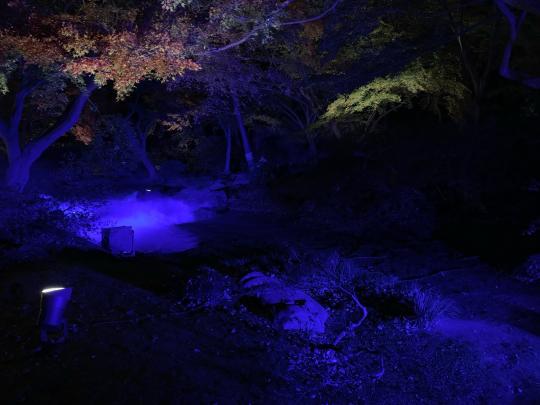 夜の駒込を徘徊する★_e0001906_18062078.jpg