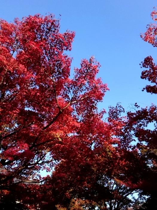 幸せ京都旅 「宝泉院」 大原の山里で心安らぐ美しき紅葉_c0362623_11094454.jpg