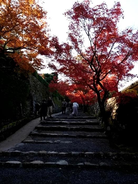 幸せ京都旅 「宝泉院」 大原の山里で心安らぐ美しき紅葉_c0362623_11094712.jpg