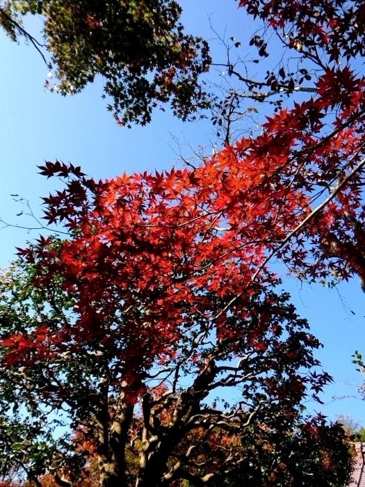 幸せ京都旅 「宝泉院」 大原の山里で心安らぐ美しき紅葉_c0362623_11094792.jpg