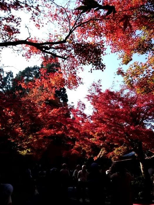 幸せ京都旅 「宝泉院」 大原の山里で心安らぐ美しき紅葉_c0362623_11094852.jpg