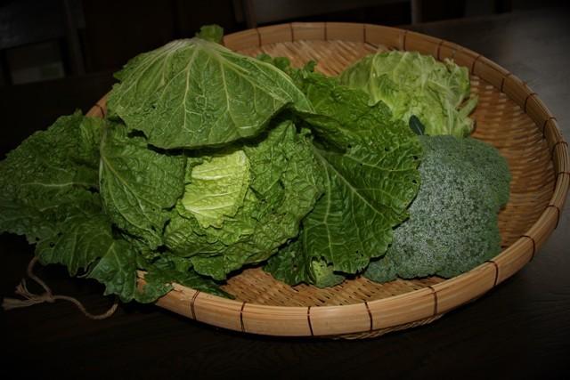 大きな3.5Kの 白菜収穫~♬_f0229190_16091017.jpg
