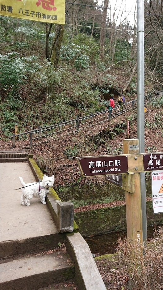 わかばと高尾山へ!_f0039907_14592596.jpg