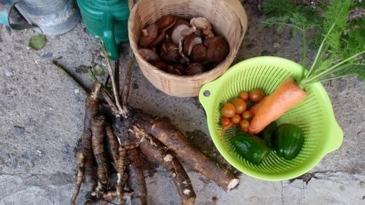 野菜不買月間更新中_f0208315_09433993.jpg