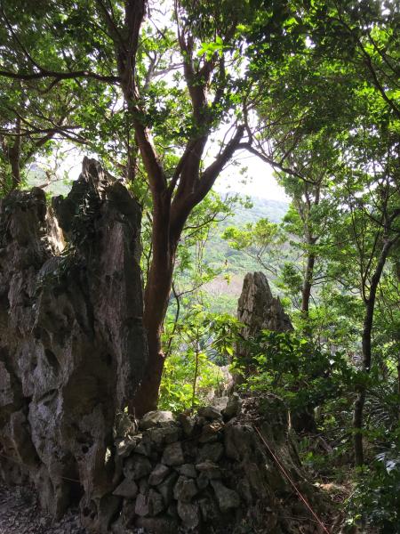 沖縄の旅。 その5 @大石林山_b0157216_23112680.jpg