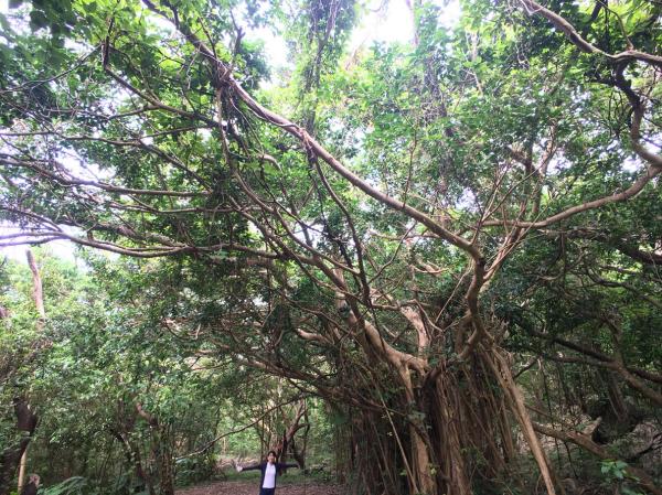 沖縄の旅。 その5 @大石林山_b0157216_23142148.jpg