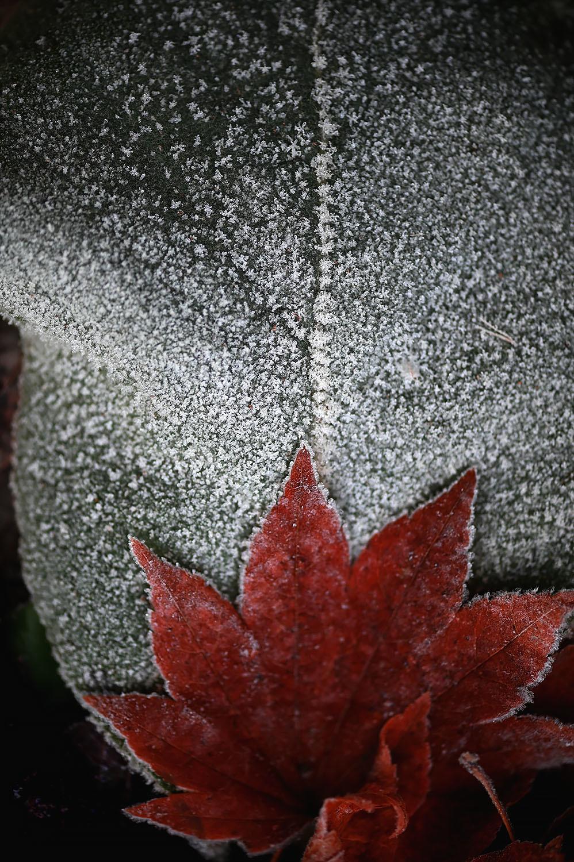 霜の朝_d0265224_21065161.jpg