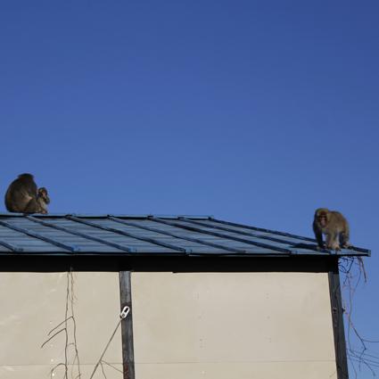 猿、来襲_f0209754_21393731.jpg