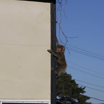 猿、来襲_f0209754_21402060.jpg