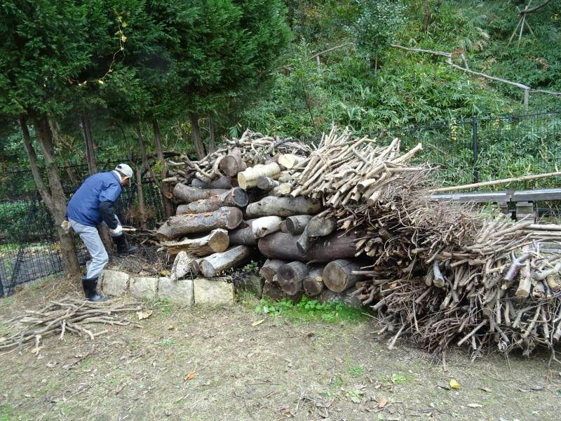 伐採木整理&薪割り・・・うみべの森_c0108460_17275390.jpg