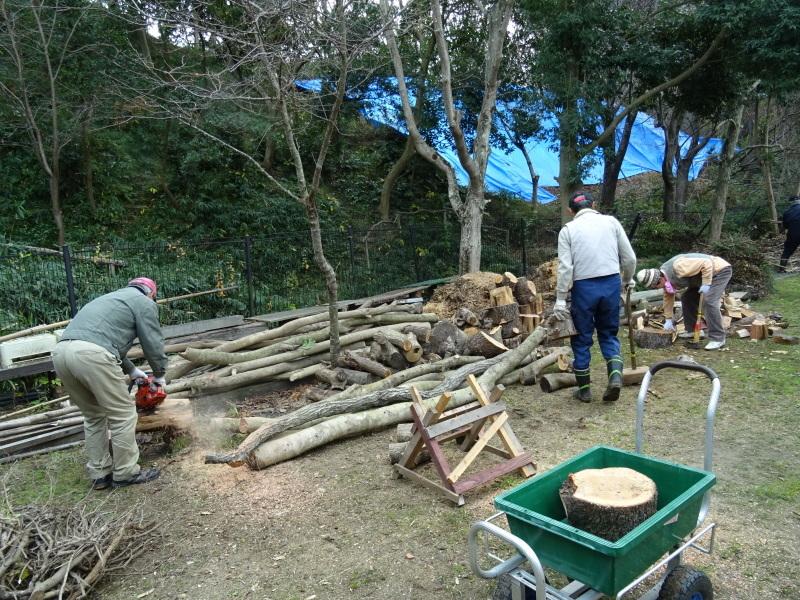 伐採木整理&薪割り・・・うみべの森_c0108460_17300098.jpg