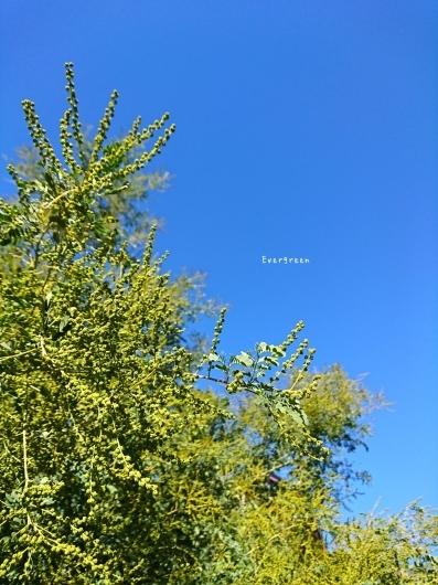 12/13(木)       時はいつも流れてる。_d0362666_18315489.jpg
