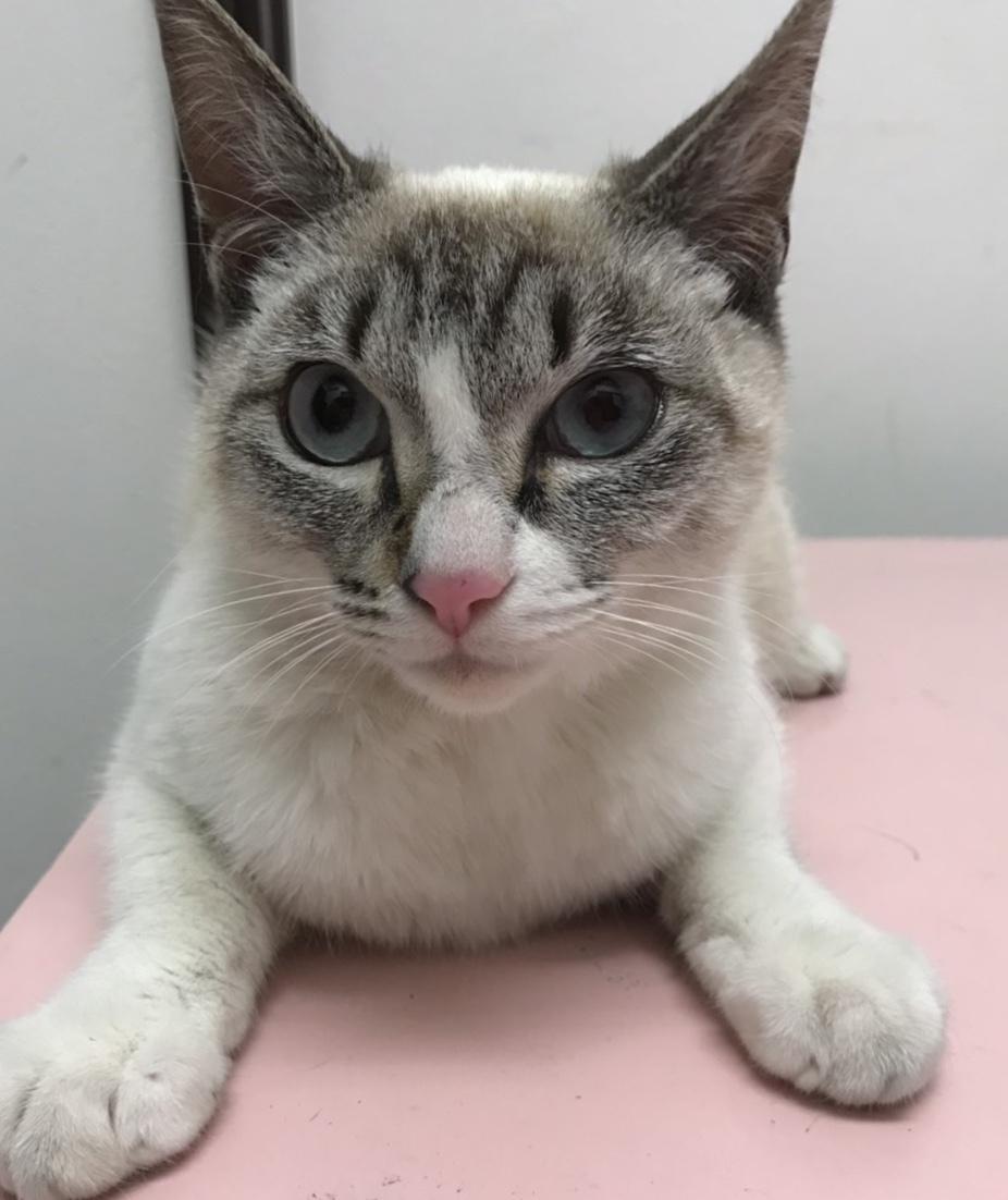 迷子のネコさん!_c0245679_20453261.jpeg