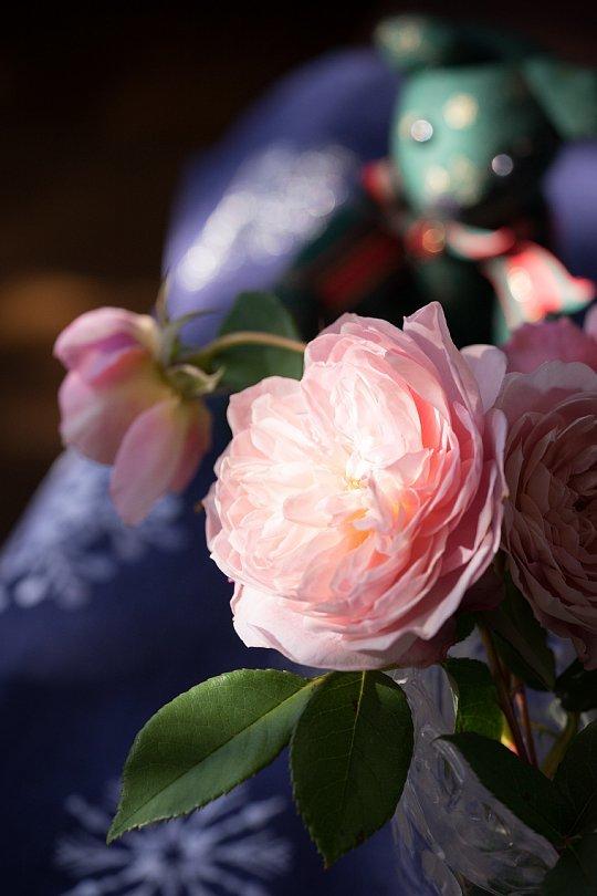 12月の薔薇_d0353489_20003208.jpg