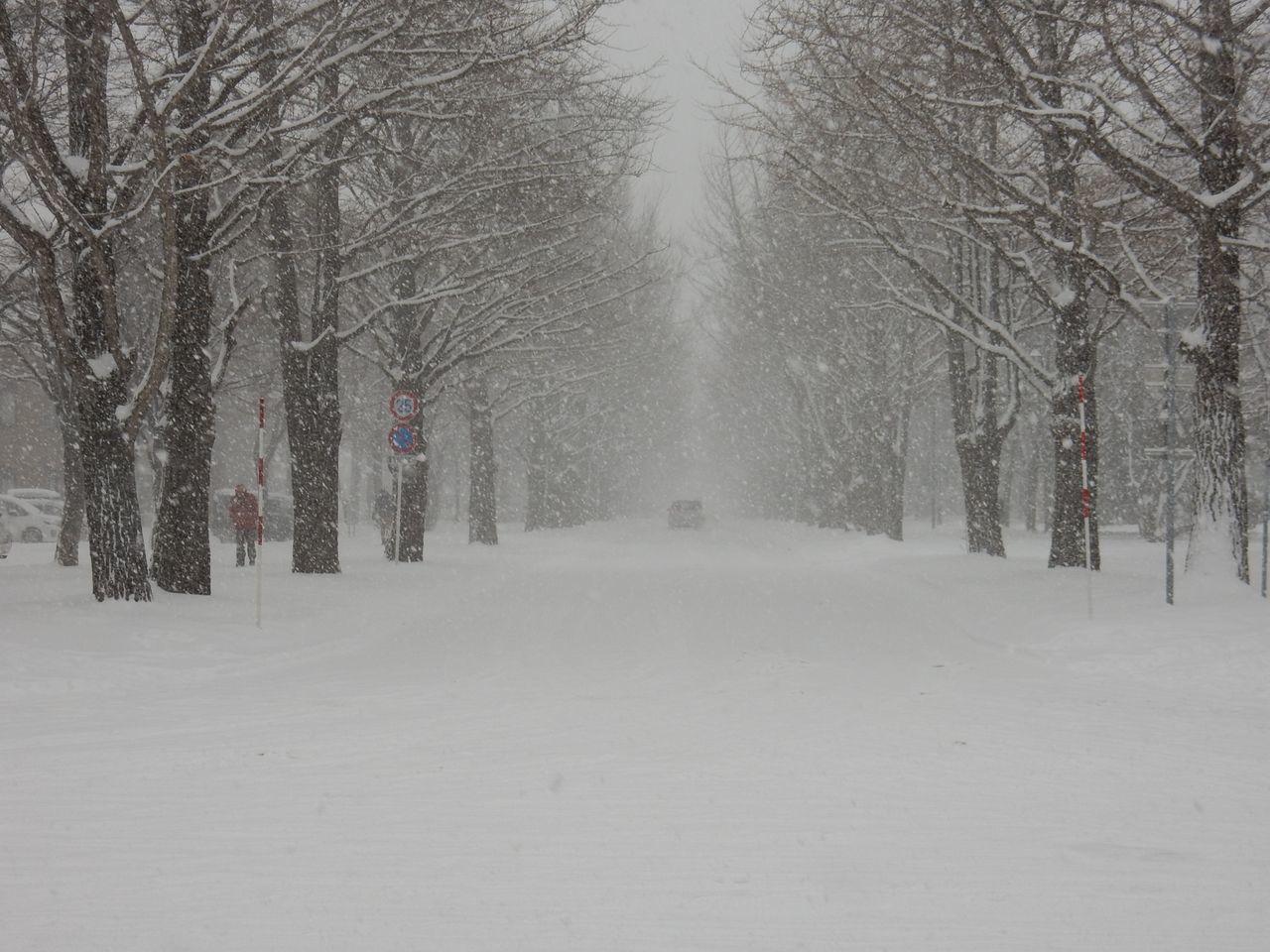 吹雪の北大へ_c0025115_21512171.jpg