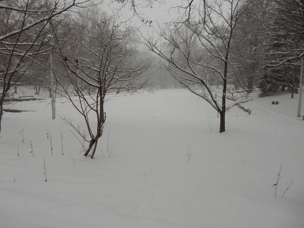 吹雪の北大へ_c0025115_21512752.jpg