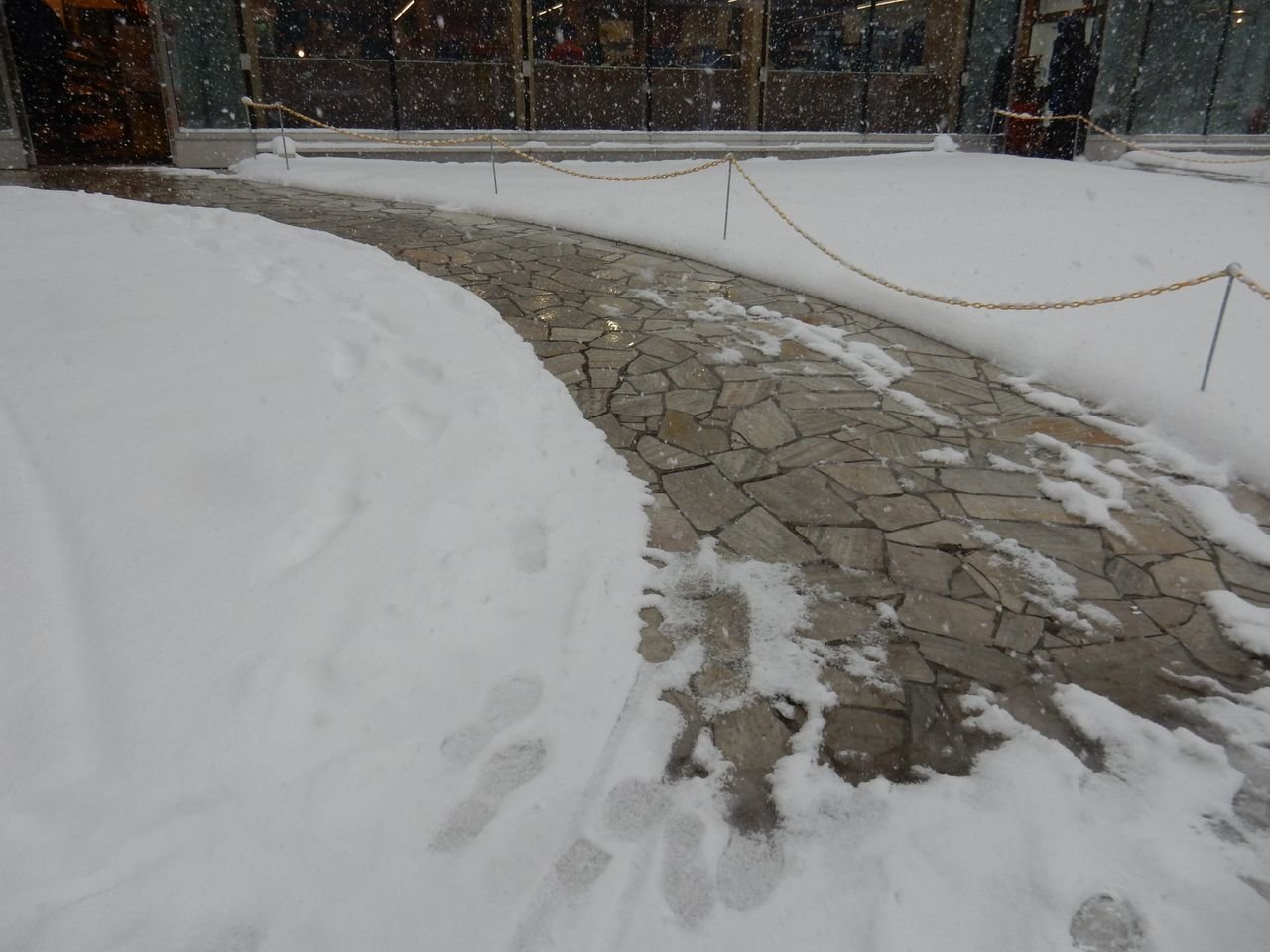 吹雪の北大へ_c0025115_21513589.jpg