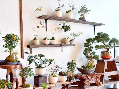 1月の植物ワークショップのご案内_d0263815_16384987.jpg