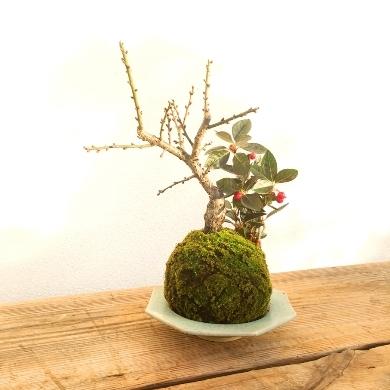 1月の植物ワークショップのご案内_d0263815_16445427.jpg