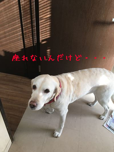c0114121_00130841.jpg