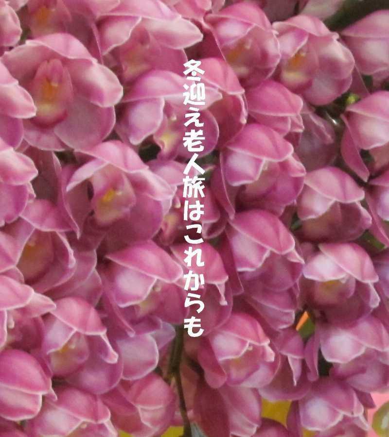 f0117041_05123607.jpg