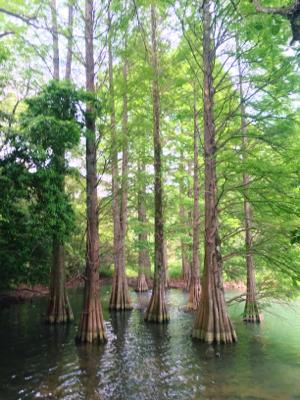 博多ひとり旅 1日目〜島と森と美術館と水炊き編~_b0405445_20295505.jpg