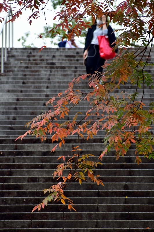 晩秋の大阪城 2_a0355356_22330368.jpg