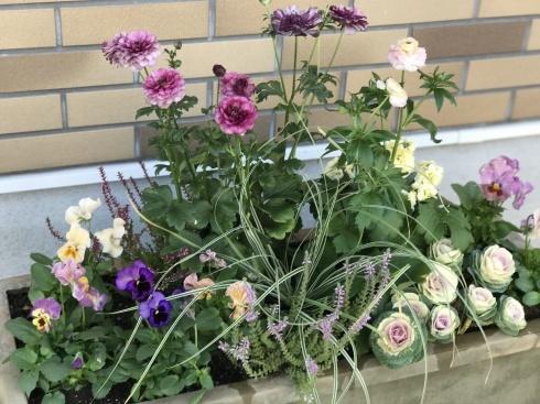 アナーセン、入荷の花、昨日のお仕事_b0137969_08150668.jpg