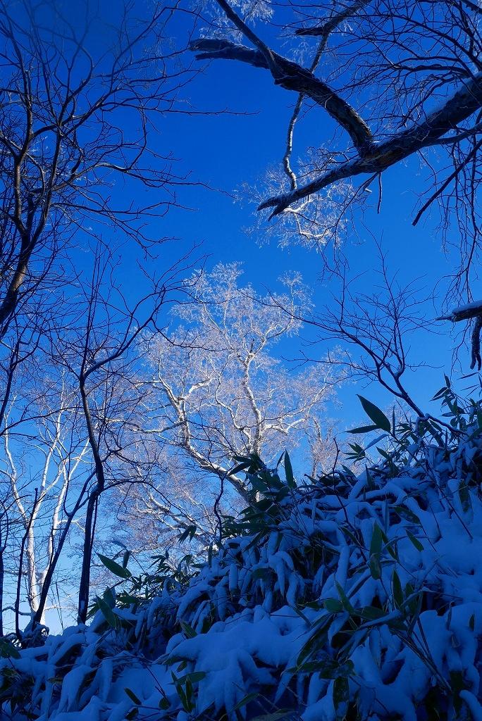 風不死岳北尾根、2018.12.13ーその1ー_f0138096_17285802.jpg
