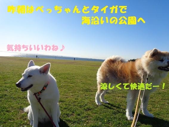 f0121712_22263652.jpg