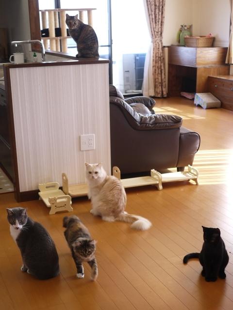 猫のお留守番 天ちゃん麦くん茶くん〇くんAoiちゃん編。_a0143140_19531258.jpg