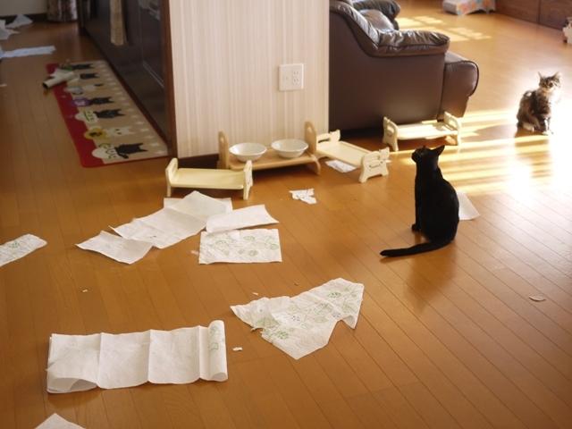 猫のお留守番 天ちゃん麦くん茶くん〇くんAoiちゃん編。_a0143140_19554040.jpg