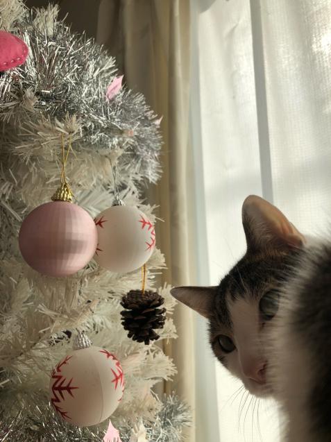 白いクリスマスツリー_e0379544_10585865.jpg