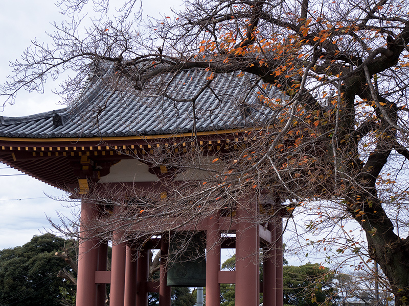 Hello from Tokyo 89 池上本門寺 _a0003650_22185162.jpg