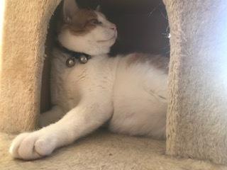 【猫・移動先募集】センター(支所)収容(2/16訪問)_f0242002_18542782.jpg