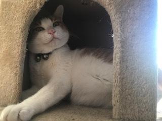 【猫・移動先募集】センター(支所)収容(2/16訪問)_f0242002_18543224.jpg