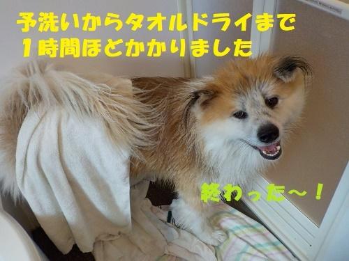 f0121712_00385698.jpg
