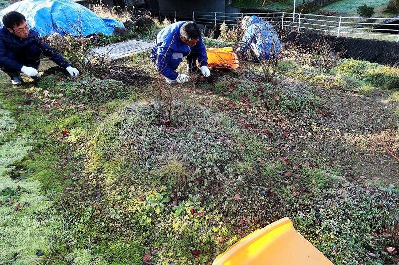 堆肥熟成とブルーベリーの越冬_f0076731_13423919.jpg