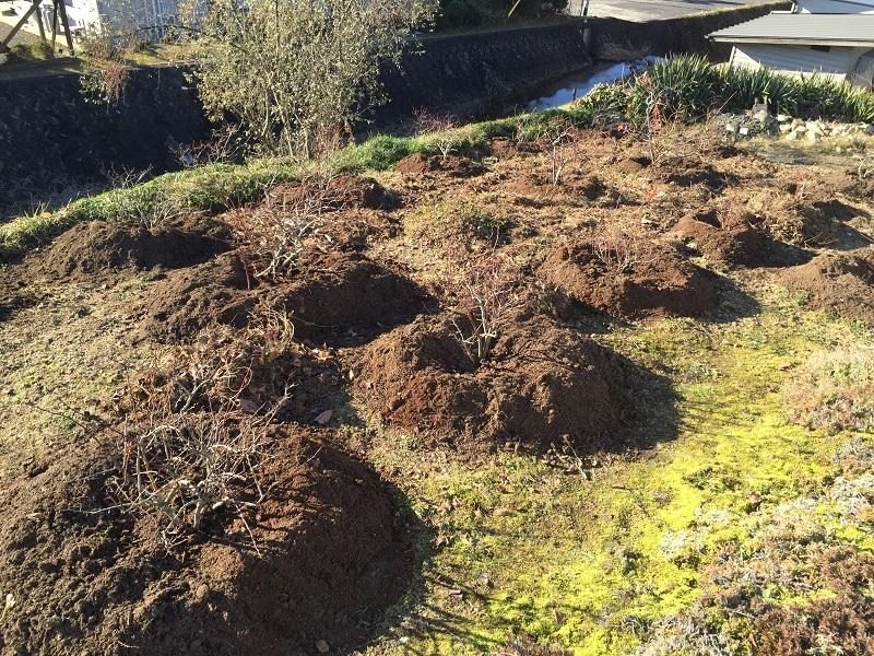 堆肥熟成とブルーベリーの越冬_f0076731_13425165.jpg