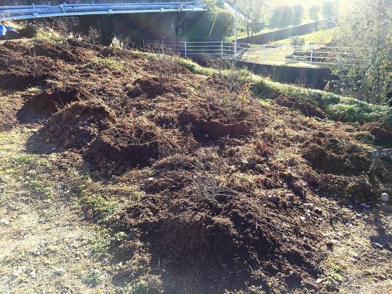 堆肥熟成とブルーベリーの越冬_f0076731_13425602.jpg