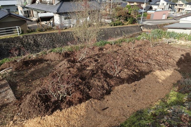 堆肥熟成とブルーベリーの越冬_f0076731_13500832.jpg