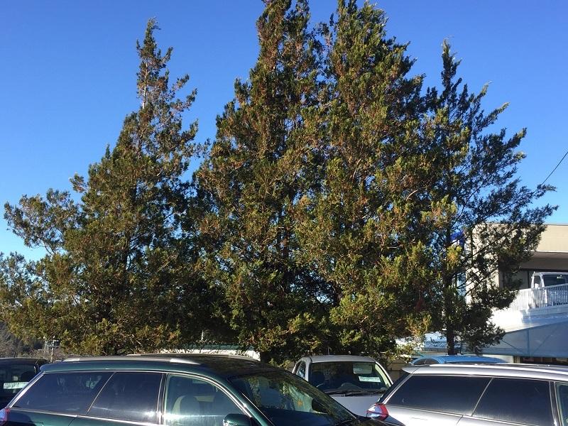 堆肥熟成とブルーベリーの越冬_f0076731_13514297.jpg