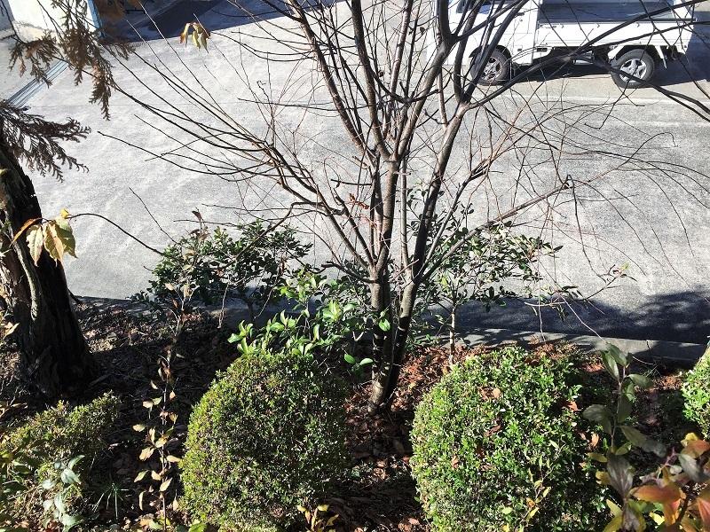 堆肥熟成とブルーベリーの越冬_f0076731_13515805.jpg