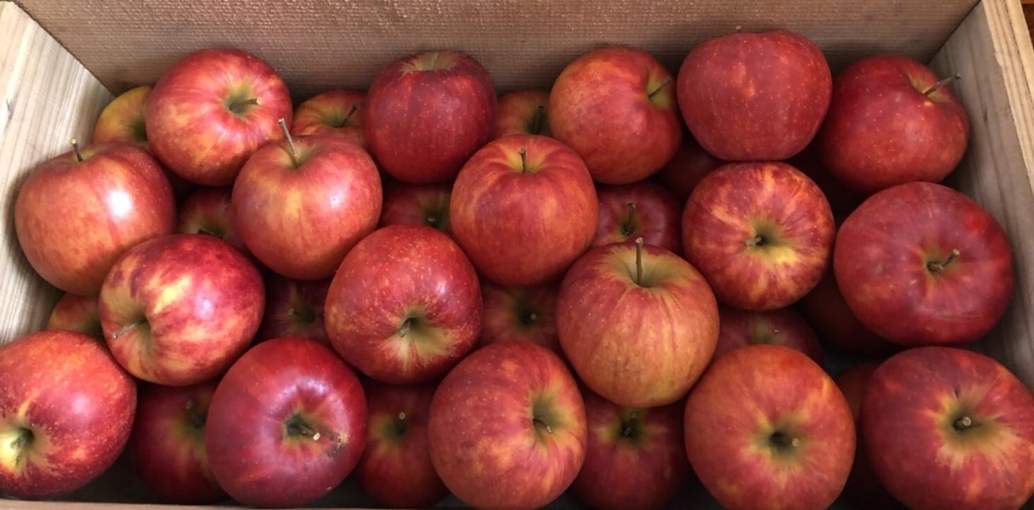 こども食堂ムラタ様からリンゴのリクエスト_b0183351_08395847.jpg
