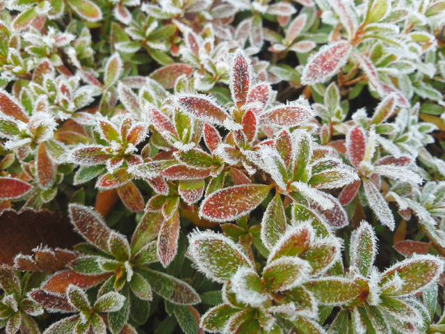 綺麗な夜明け☆マイナス3℃まで回復 (*^^*) 凍っています 🌸🌼🌸_f0061067_1816434.jpg