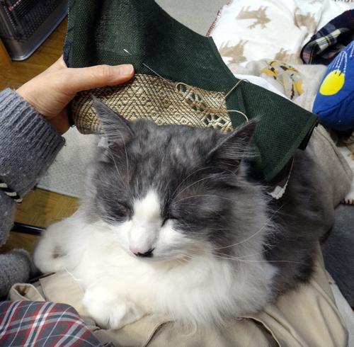 こぎん刺し、ちくちくしてれば猫が来る♪_a0136293_16344453.jpg